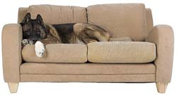Brown couch with large dog on it