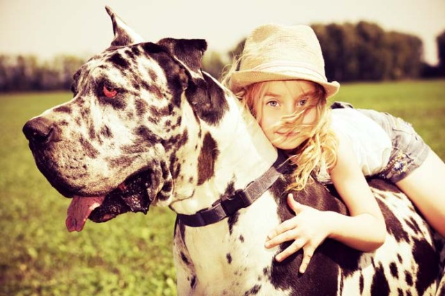A child is playing with a Great Dane dog
