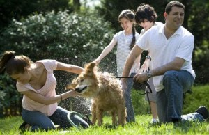 Bacteria from Dog's May Be Beneficial to Human Health