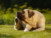 Best Dog Flea Treatments and Prevention