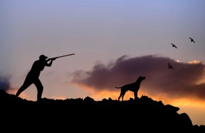 Best Hunting Dogs for All Types of Game Hunting