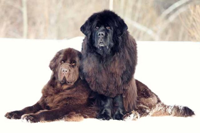 Best Small Dogs for Kids Newfoundland