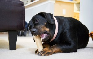 Dog Nutrition 101: A Quick Overview of Dog Feeding
