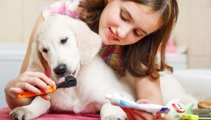 Grooming your dog yourself at home