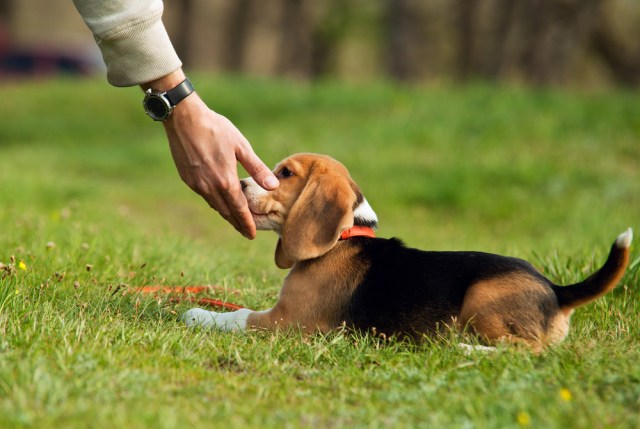 How to Effectively Train a Dog