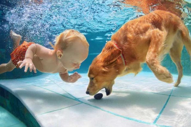 Labrador Retriever and toddler in the pool