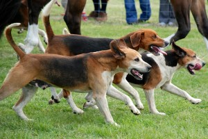 Must-Know Dog Training Tips