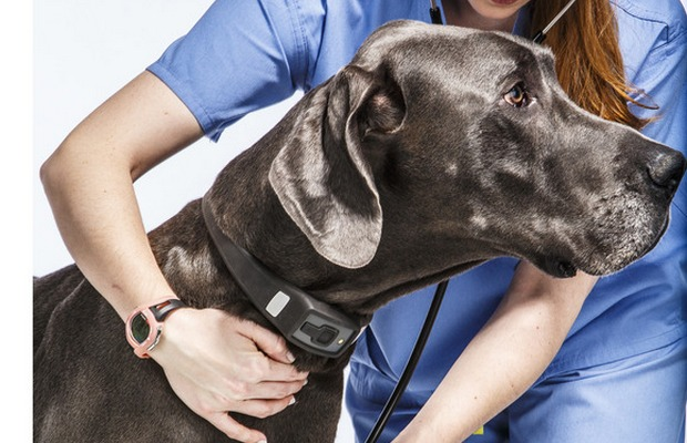 Pet Health Trackers Becoming More Popular