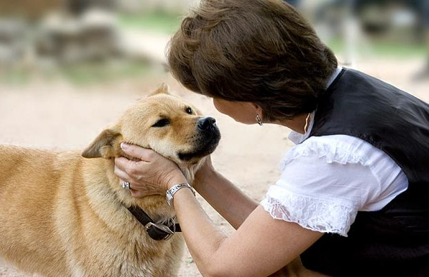 Study Shows Dogs Understand Our Words Not Just Our Voices