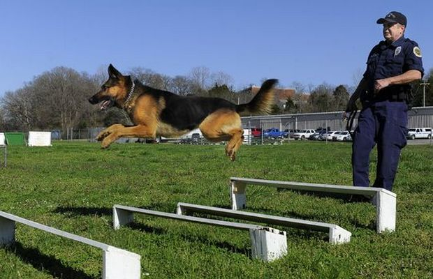 Tennessee Police K-9 Killed By Bank Robber Inspires New Law