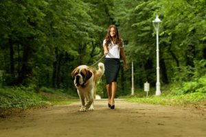Top Tips on How to Teach a Dog to Walk On a Leash Safely and Effectively