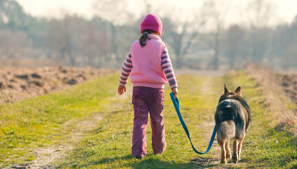 Top Tips on How to Teach a Dog to Walk On a Leash