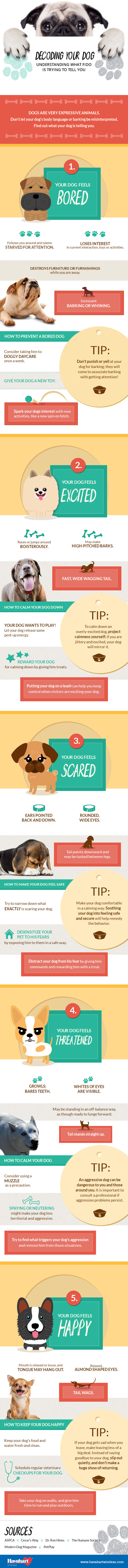 Understanding Your Dog's Body Language Infographic