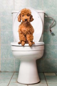 Use laws of nature to toilet train puppies