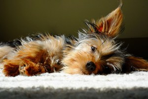 What You Need to Know About Poison Prevention for Dogs