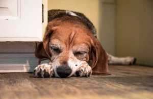 What You Need to Know About Poison Prevention for Dogs PetsWhat You Need to Know About Poison Prevention for Dogs Pets