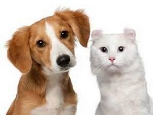 A Pet Business That Focuses on Pet's Best Interests