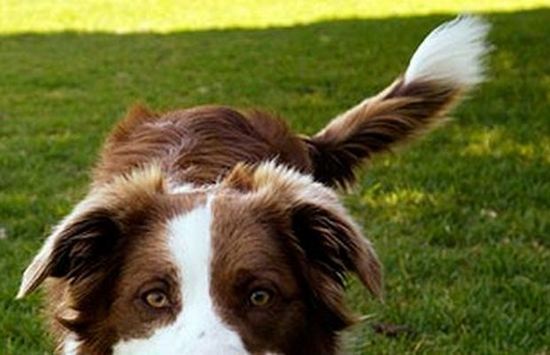 A Student Startup Company is Helping You Track Your Dog's....Tail?