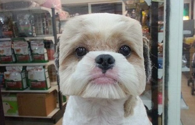 Dog Grooming In Taiwan Takes is On a New Geometric Trend