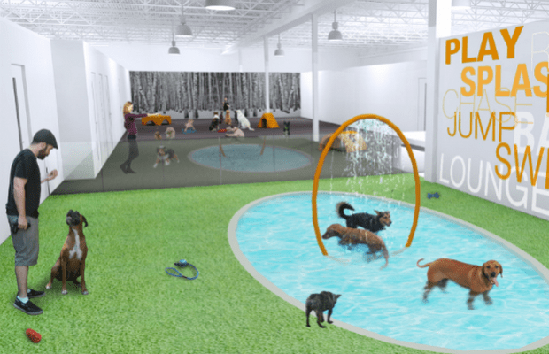 Dog Hotel Offers Pups the VIP Treatment