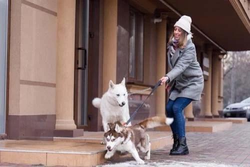 Dog Leash Pulling