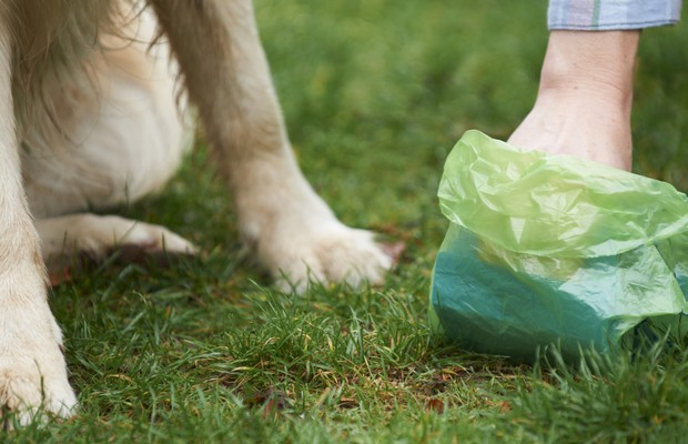 Government Says Dog Waste Bags Aren't as Green as Advertised