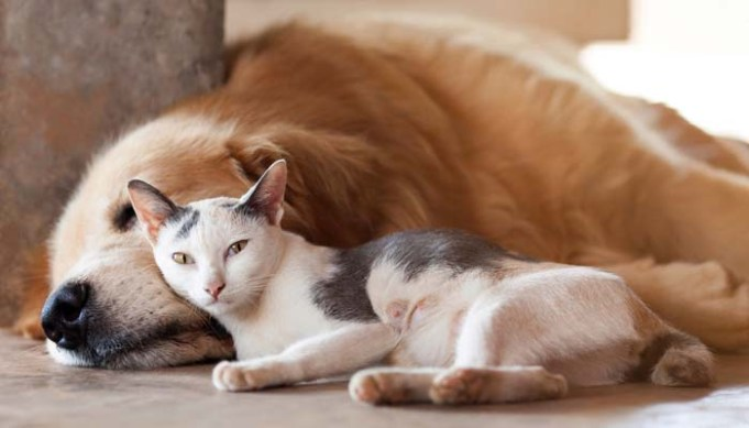 How to Adopt a Dog if You Already Have a Cat