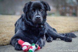 How to Choose the Right Dog Toys by Age