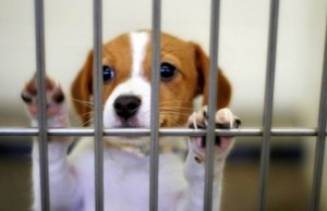 Illinois Lawmakers Considering New Rules for Pet Shops to Help Stop Puppy Mills
