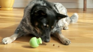 Paww is Trying to Reinvent the Dog Toy With the Help of Crowdfunding