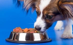 Pet Food Market is Being Taken Over By Human Food Companies