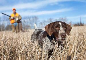 Struggling Garmin May Be Saved By Dogs
