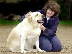 Student Developed App Helps Keep Dogs Healthy