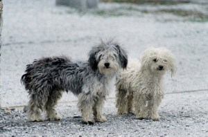 Tips on How to Help a Stray Dog