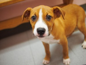 You've Adopted a Puppy - Now What