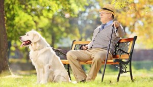 how long do dogs live today and dog lifespan
