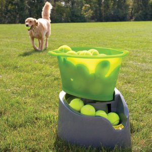 Best Dog Tech Devices Pet Owners Love