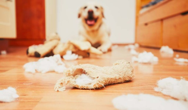 Best Dog Supplies for Solving Bad Behavior Problems in Dogs