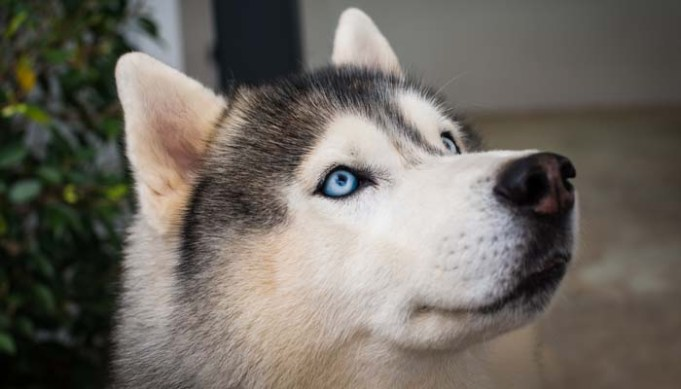 Do Dogs See in Color According to Science