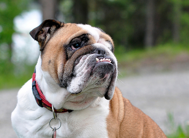 Dog Teeth Cleaning 101 - How to Clean Dogs' Teeth