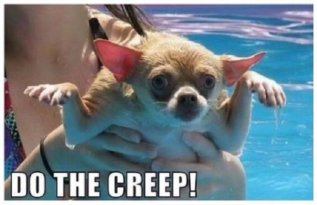 Dogs You Will Find at a Pool Pawty