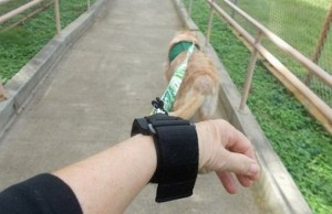 Homeless Veteran Creates a Hands Free Way to Walk Your Dog