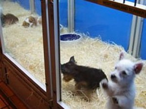 New Pet Shops Temporarily Banned in San Marcos, TX