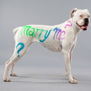 Pet Paint Lets You Customize Your Pooch