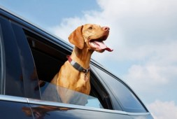 Top 10 Best Pet Apps for Dog Owners