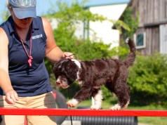 Top 10 Must Have Dog Training Supplies