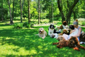 Where to Buy a Dog Responsible Adoption