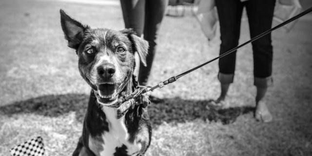 dog colorblind black white myth dispelled