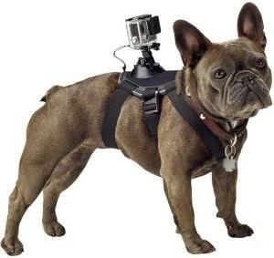 gopro pet harness