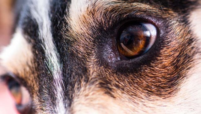 why dogs are not colorblind